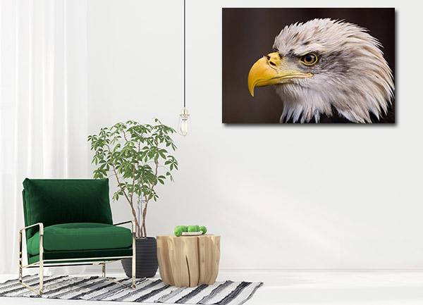 Bald Eagle Canvas Prints