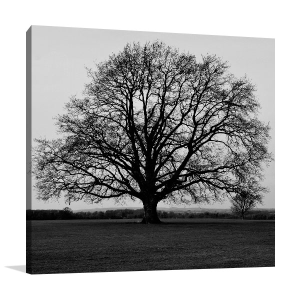 Bare Oak Tree Artwork