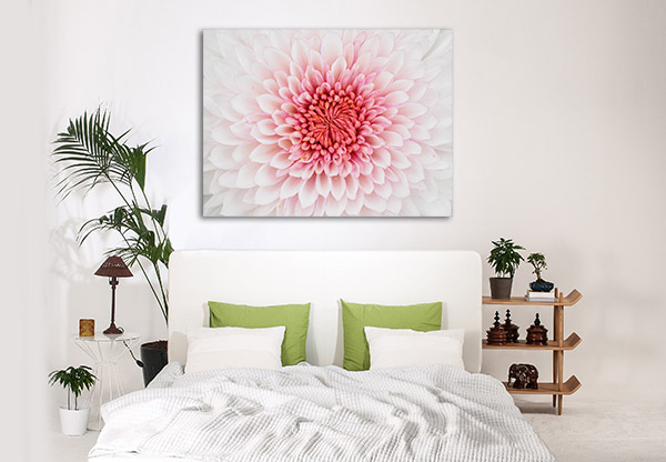 Beautiful Chrysanthemum Canvas Prints