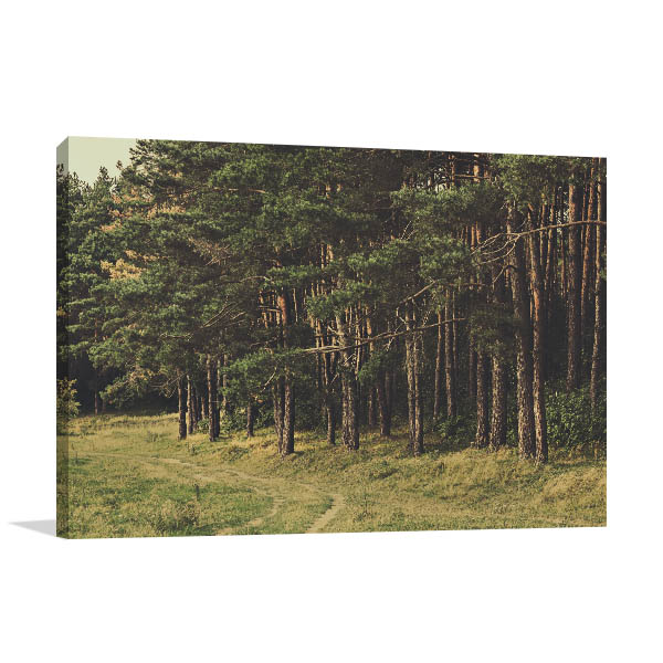 Beautiful Pine Forest Canvas Art Prints