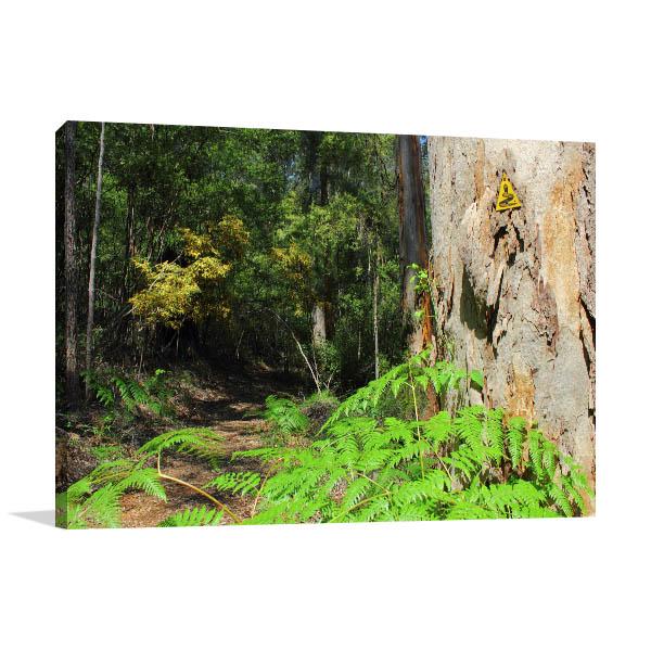 Beedelup Perth Art Print Hiking Track Canvas Art Prints