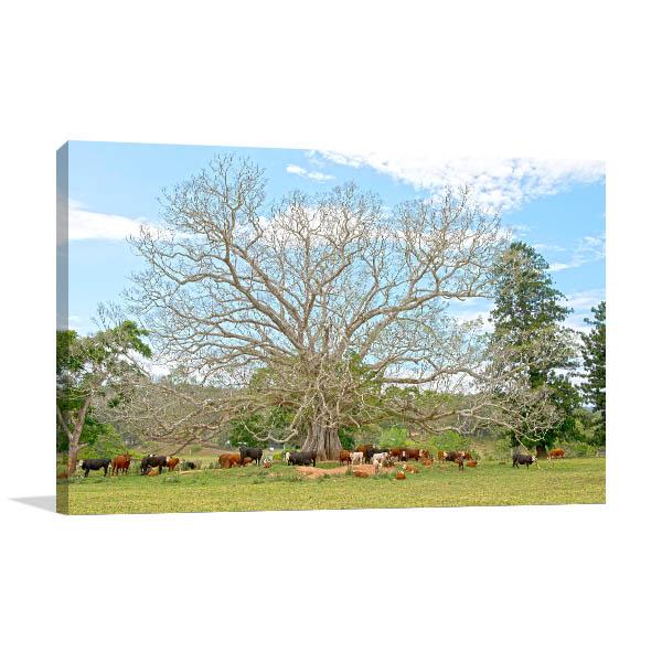 Bellingen Giant Fig Tree Artwork