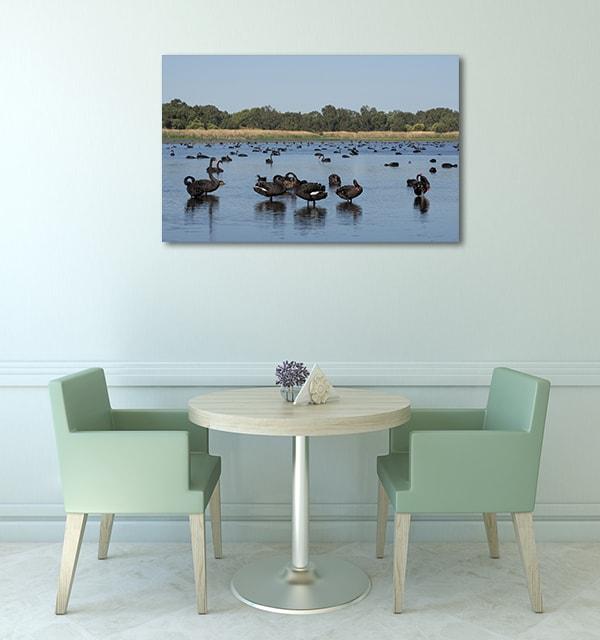 Black Swans On A Lake Perth Art Prints