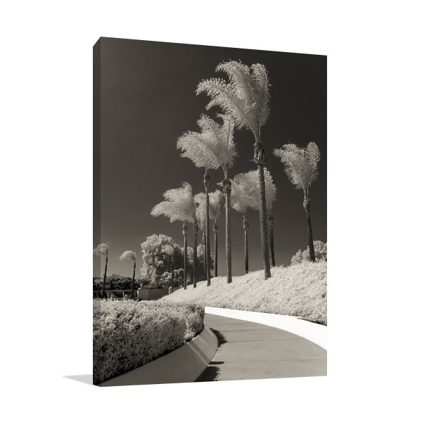 Black & White Palm Trees Photo Canvas