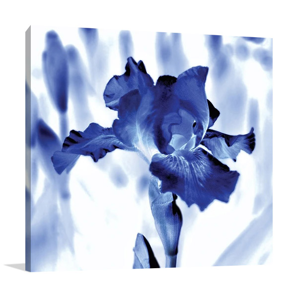 Blue Ice Iris Wall Print | Kelly Donovan