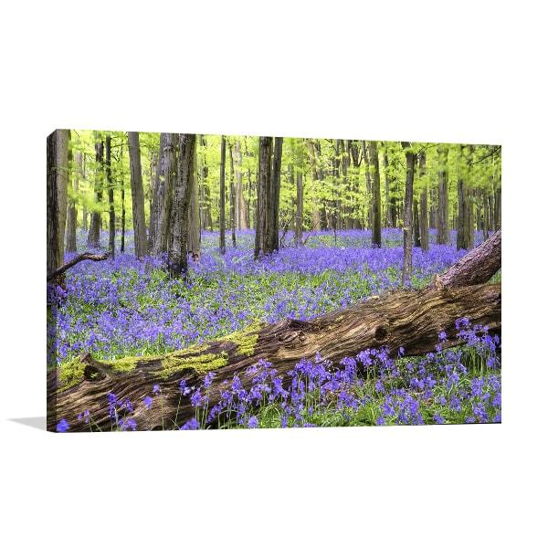 Bluebell Forest Artwork