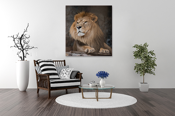 Brave Lion Art Print on the wall