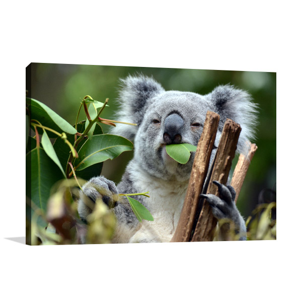 Brisbane Art Print Lone Pine Photo Wall