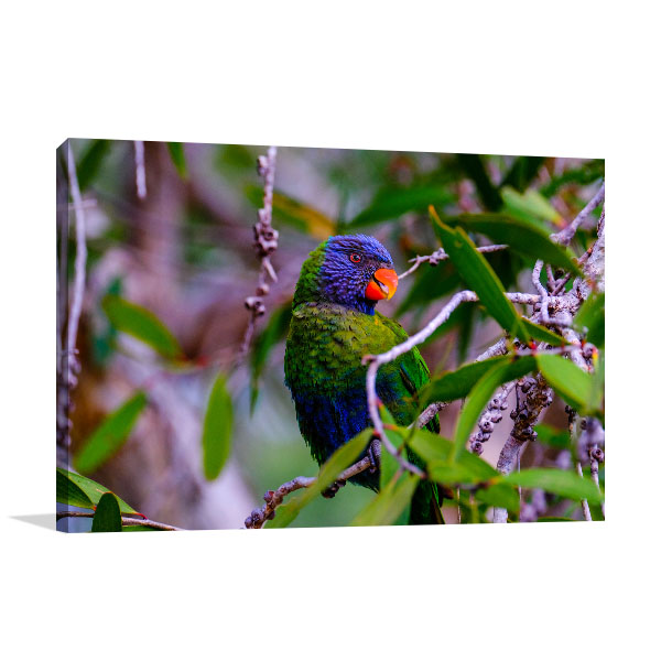 Brisbane Art Print Thornlands Rainbow Parrot