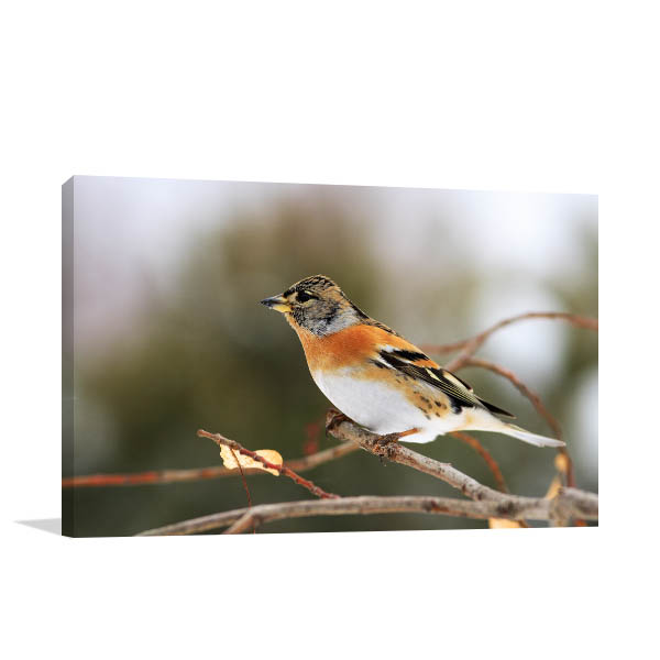 Brown Bird Canvas Prints
