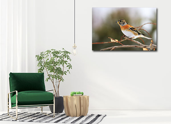 Brown Bird Art Prints