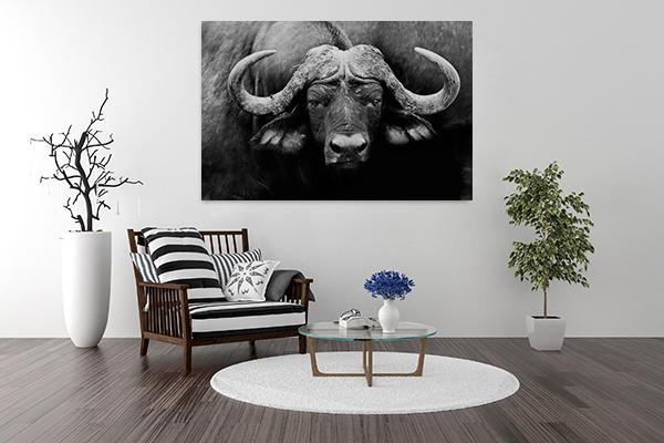 Buffalo Cape Art Print on the wall
