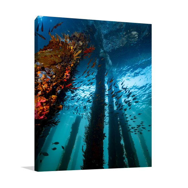 Busselton Jetty Perth Art Print Fishes Canvas Wall Art
