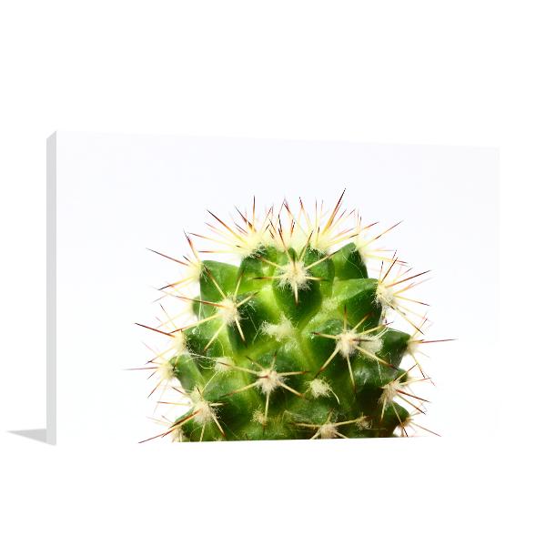 Cactus Print Artwork