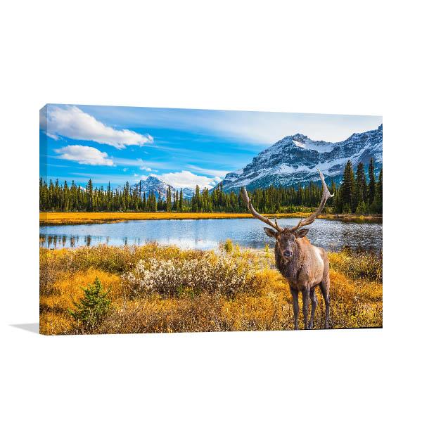 Canada Deer Canvas Art Prints