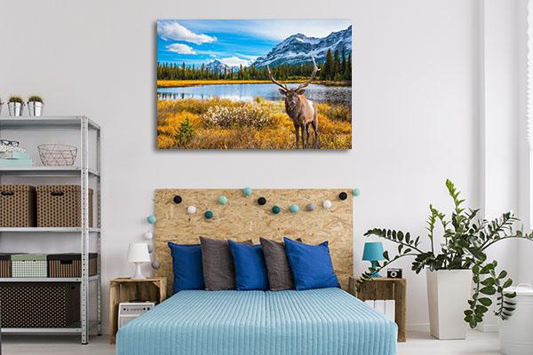 Canada Deer Artwork