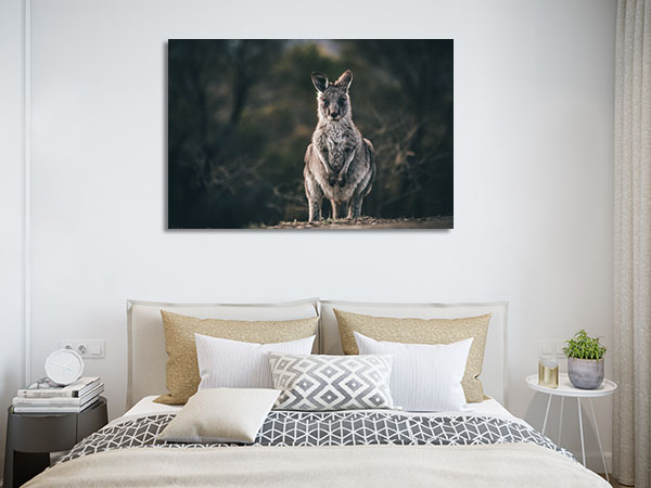 Canberra Kangaroo Canvas Art Prints