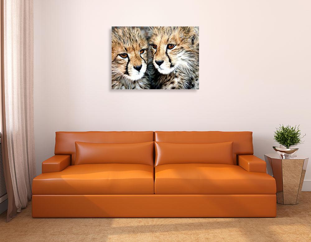 Photography Animal Canvas Art