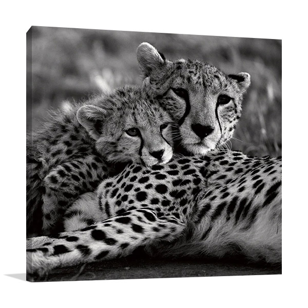 Cheetah with Cub Print | Danita Delimont