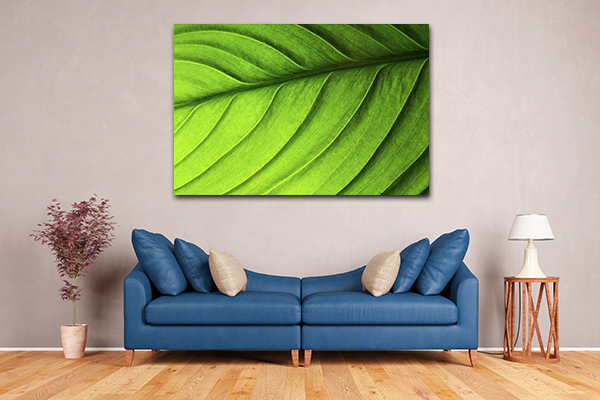 Closeup Leaf Canvas Prints