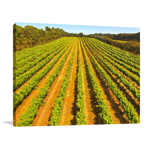 Coonawarra Canvas Print Vineyard Art Picture