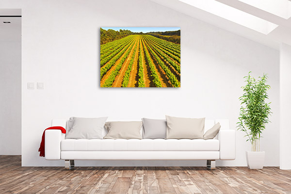 Coonawarra Canvas Print Vineyard Wall Picture