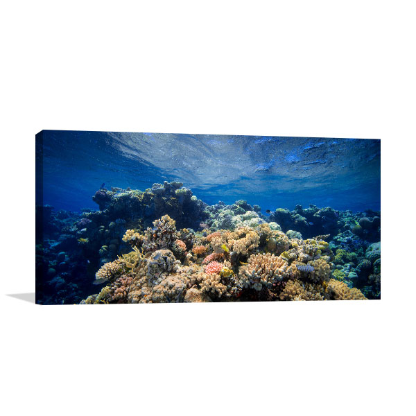 Coral Barrier Reef Canvas Print