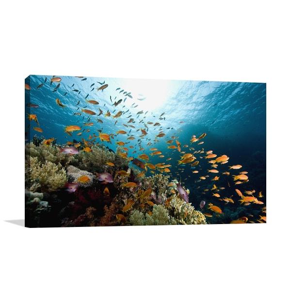 Coral Fish Art Prints