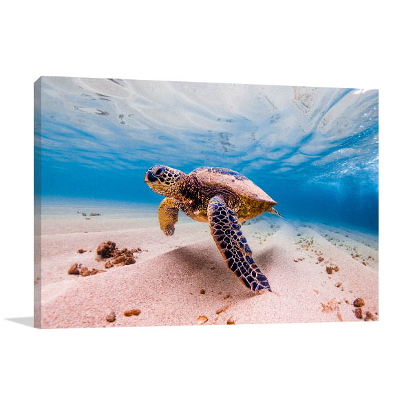 Cruising Sea Turtle Wall Art Print Canvas Art