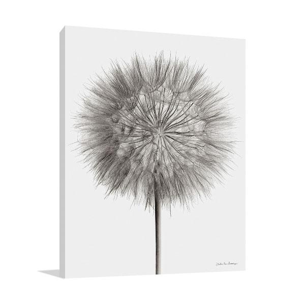 Dandelion Fluff on White Wall Print