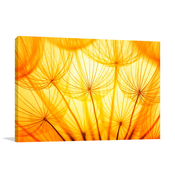 Dandelion In Golden Sunlight Canvas Prints