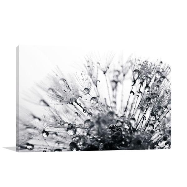 Dandelion Macro Shot Canvas Prints