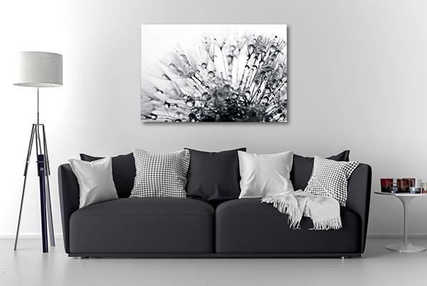 Dandelion Macro Shot Wall Art