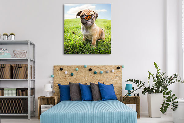 Dog and Butterfly Artwork