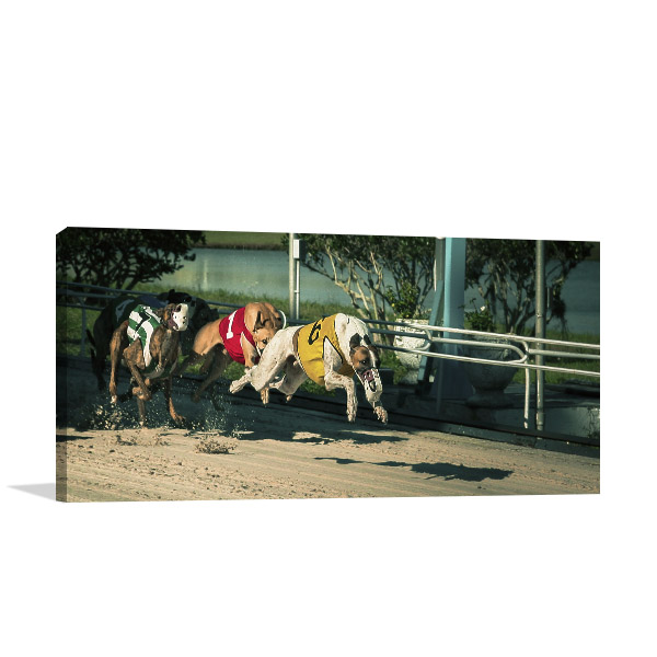 Dog Race Panoramic Canvas Prints