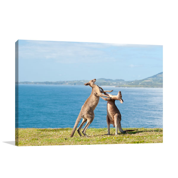 Emerald Beach Art Print Kangaroos Fighting