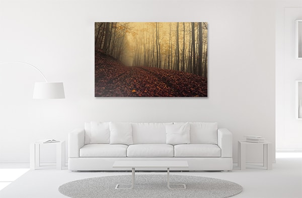 Foggy Autumn Canvas Prints