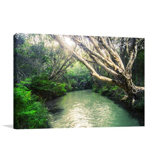 Fraser island Art Print Eli Creek