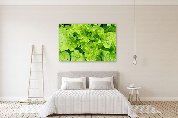 Fresh Lettuce Close up Art Print Wall Art