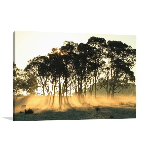 Gippsland Art Print Sunrise Grove Eucalyptus