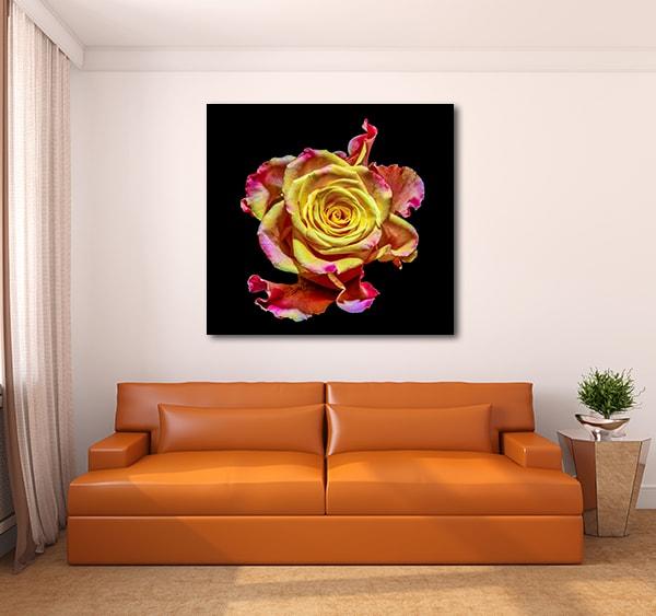 Isolated Flower Art Prints
