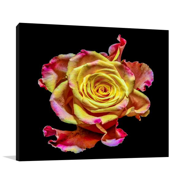 Isolated Flower Wall Art