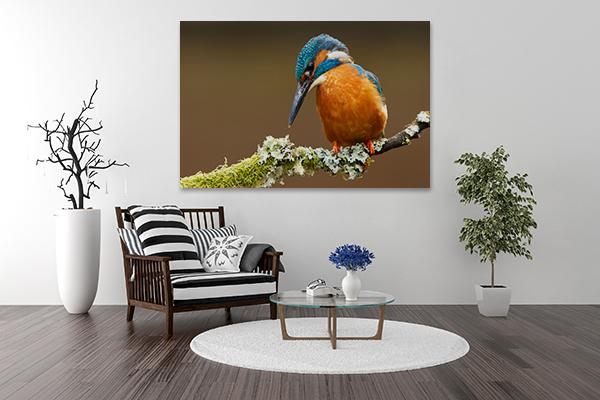 Kingfisher Wall Art Print on the wall