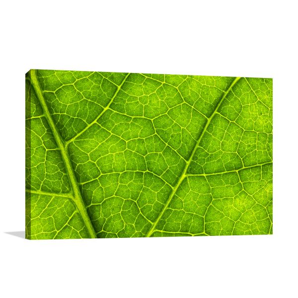 Leaf Texture Prints Canvas