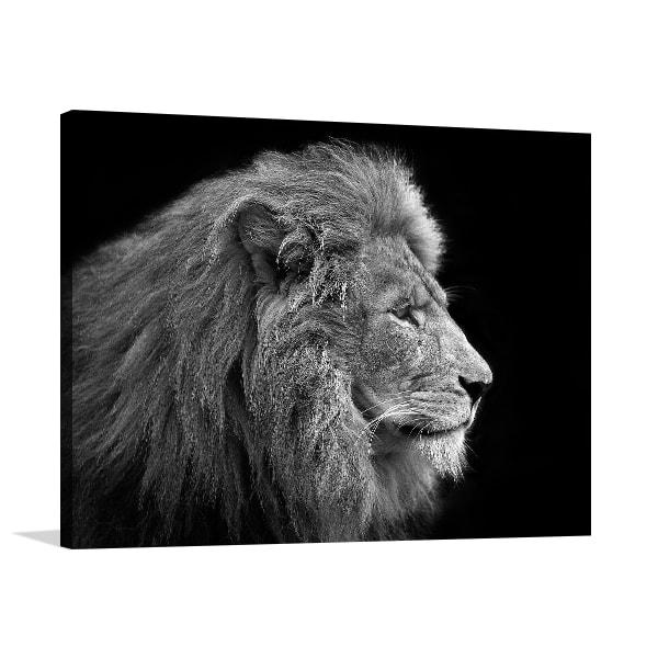 Lion Head Shot Art Prints