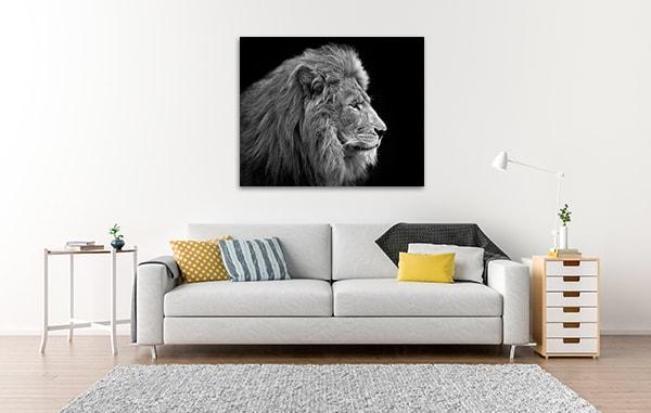 Lion Head Shot Canvas Art Prints