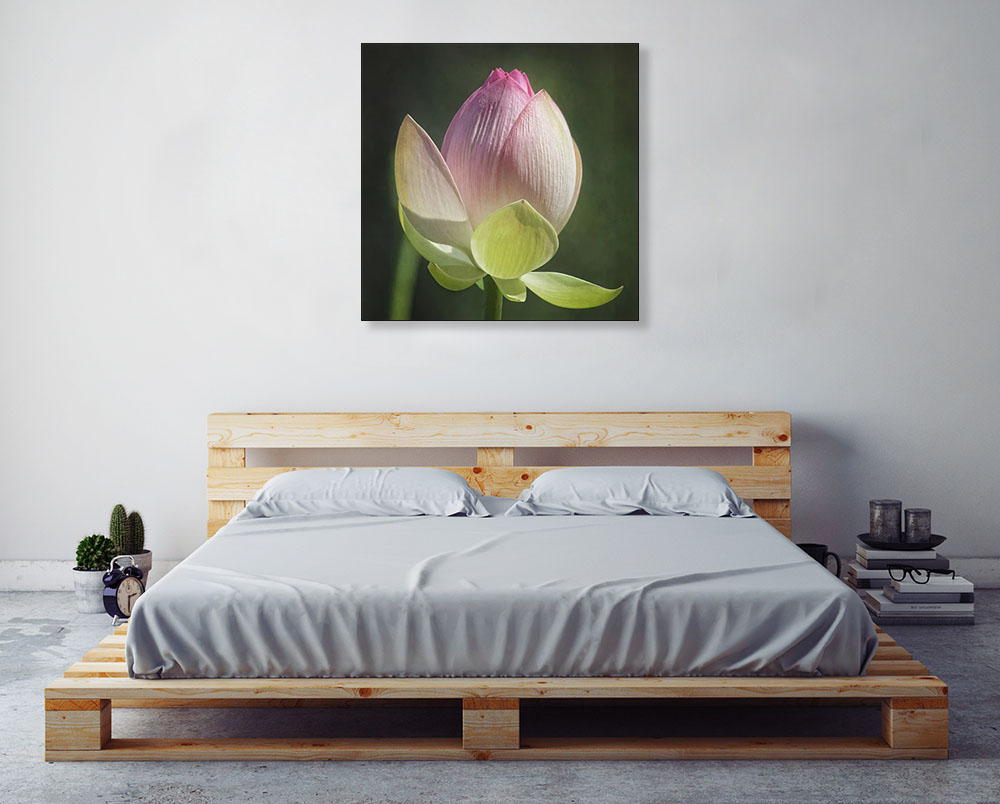 Flower Pink Lotus Photography Print