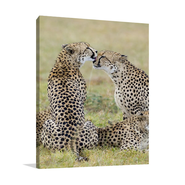 Loving Cheetah Wall Print on Canvas
