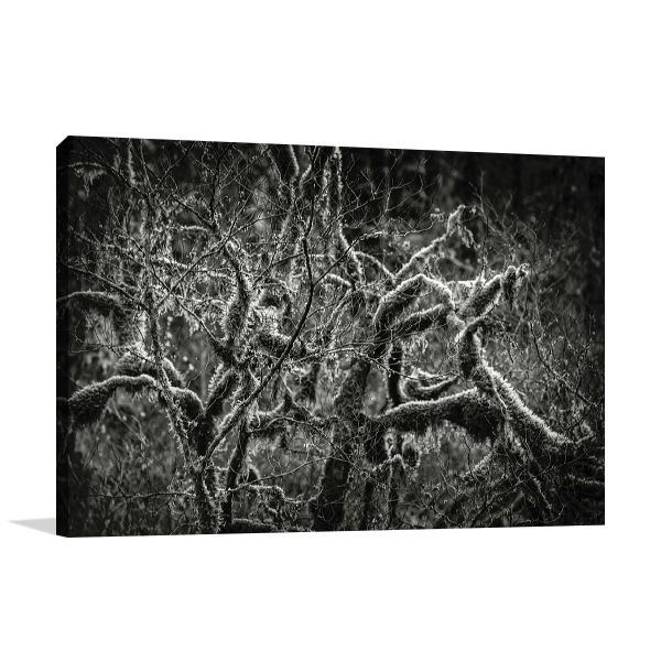 Lowland Winter Forest Wall Art Print