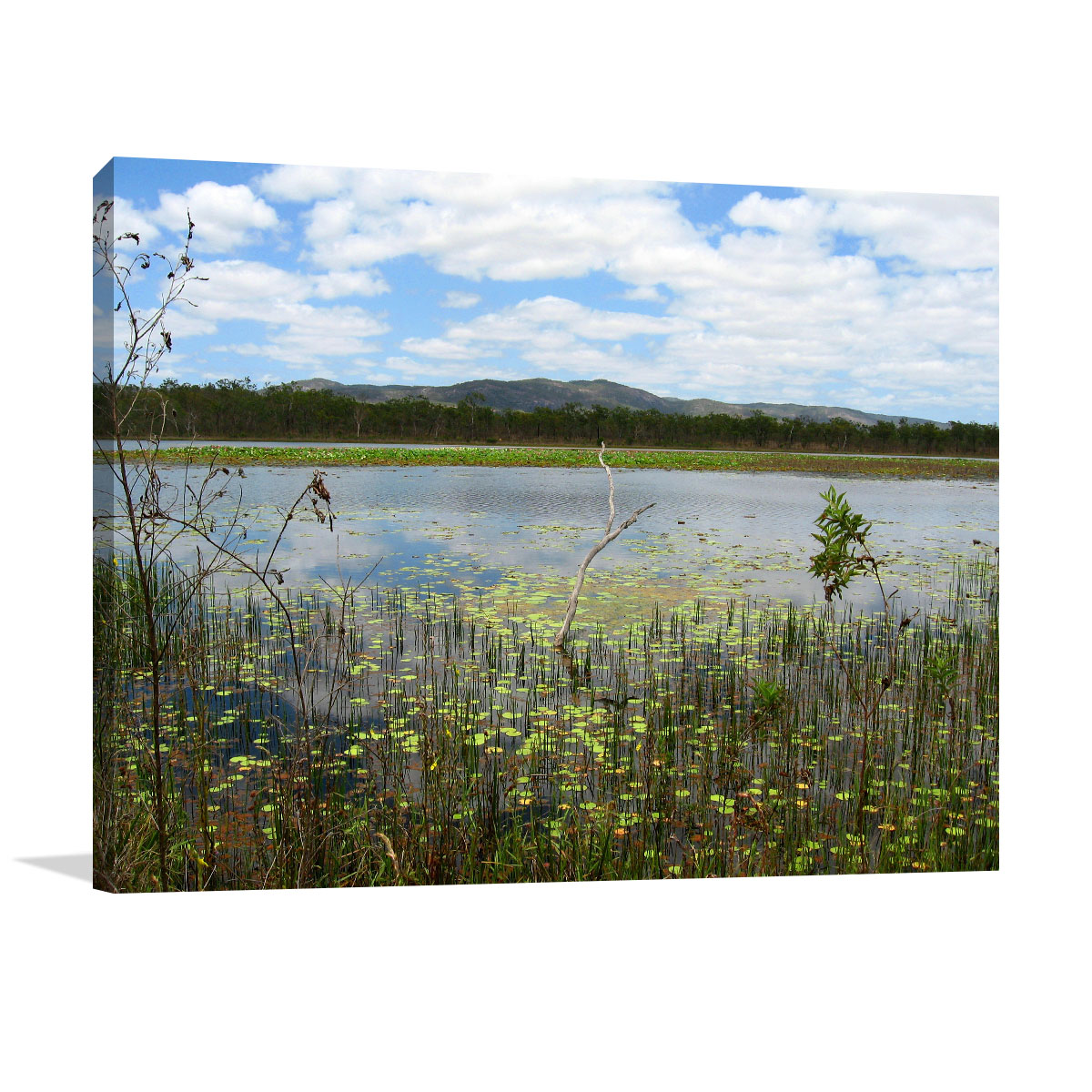 Mareeba Wall Art Print Wetlands Pond